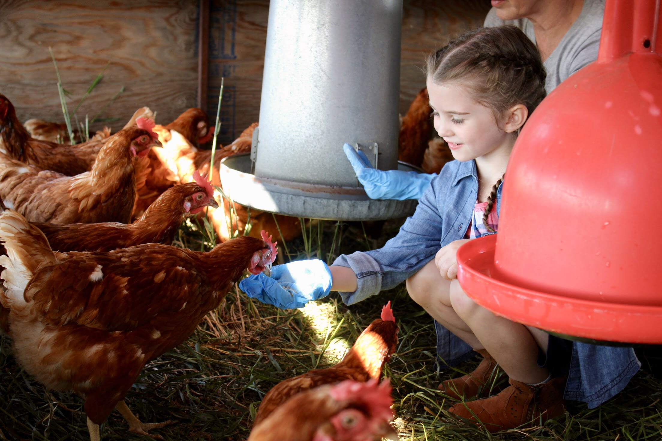 Sunworks Farm: Home to Happy Hens