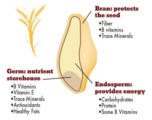 Whole Grain Nutrition Graphic Segment