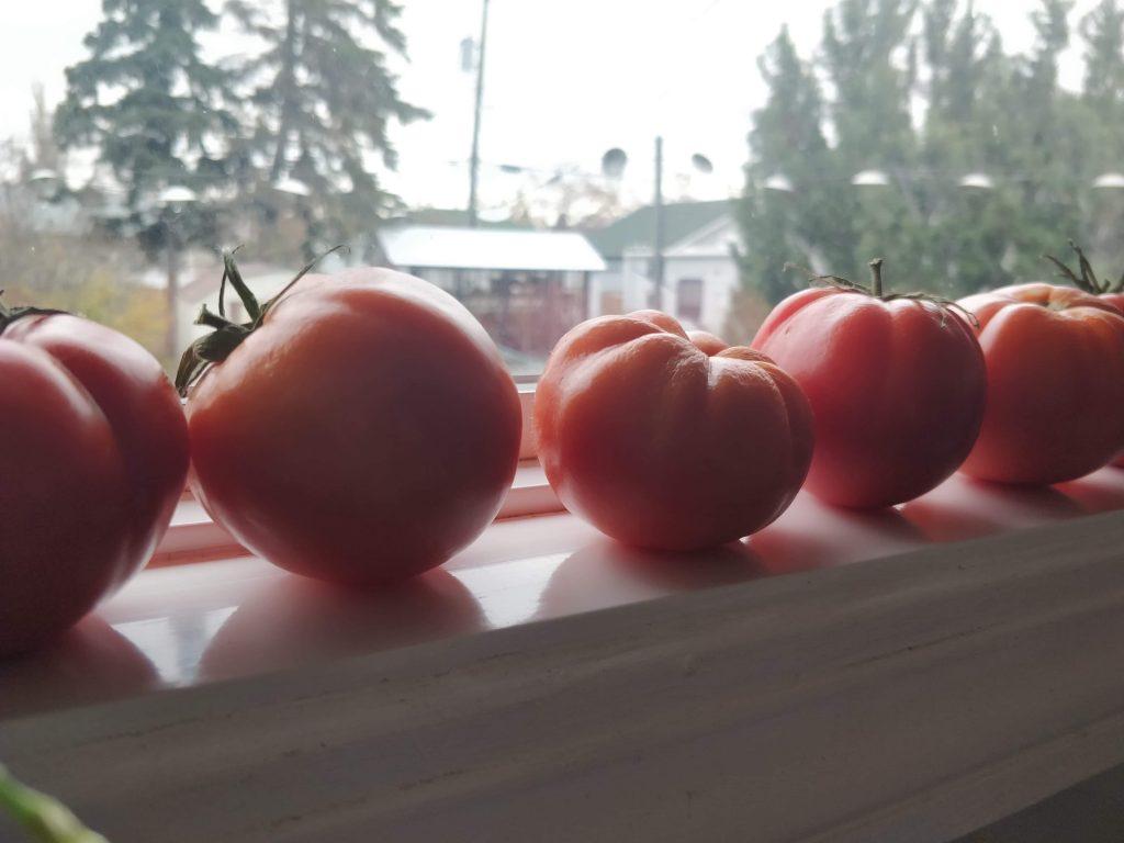 Tomatoes Sauce Deanne Ferguson